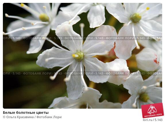 Белые болотные цветы, фото № 5143, снято 18 июня 2006 г. (c) Ольга Красавина / Фотобанк Лори