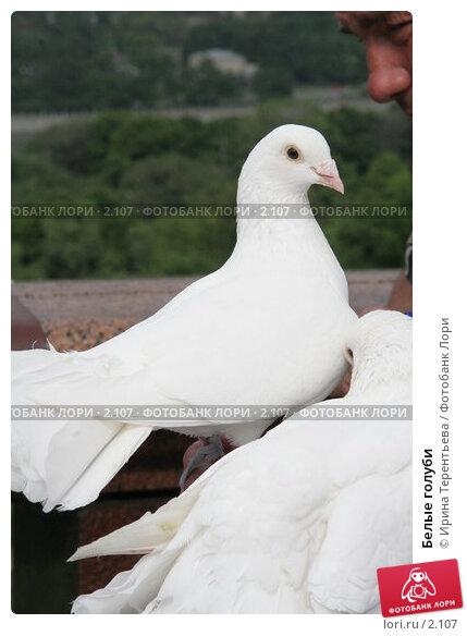 Белые голуби, эксклюзивное фото № 2107, снято 17 июня 2005 г. (c) Ирина Терентьева / Фотобанк Лори