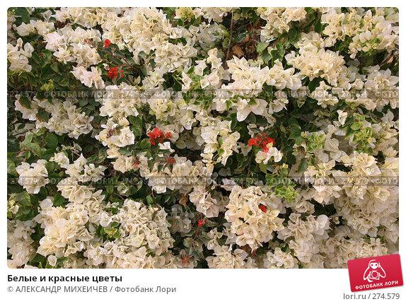 Белые и красные цветы, фото № 274579, снято 24 февраля 2008 г. (c) АЛЕКСАНДР МИХЕИЧЕВ / Фотобанк Лори