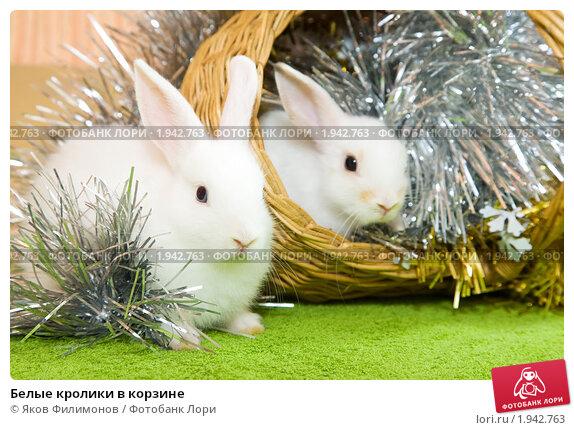Белые кролики в корзине. Стоковое фото, фотограф Яков Филимонов / Фотобанк Лори