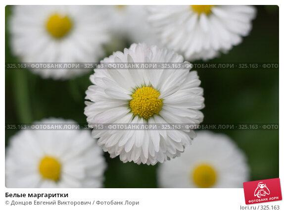Белые маргаритки, фото № 325163, снято 16 июня 2008 г. (c) Донцов Евгений Викторович / Фотобанк Лори