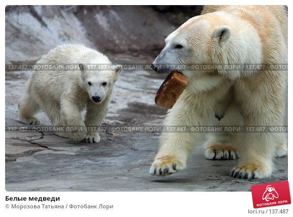 Купить «Белые медведи», фото № 137487, снято 29 апреля 2004 г. (c) Морозова Татьяна / Фотобанк Лори