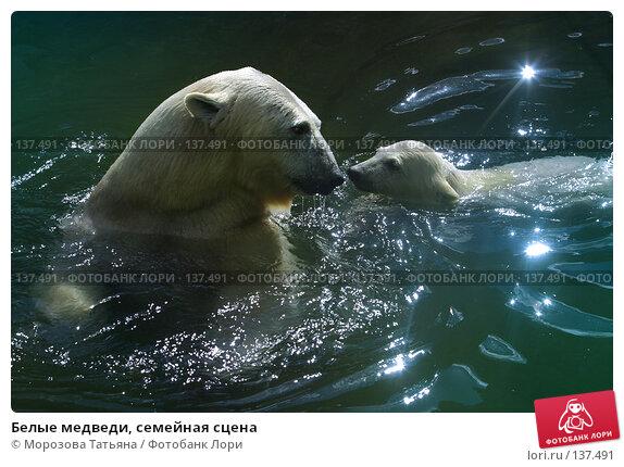 Белые медведи, семейная сцена, фото № 137491, снято 12 апреля 2006 г. (c) Морозова Татьяна / Фотобанк Лори