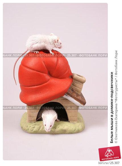 Белые мыши в домике-подсвечнике, эксклюзивное фото № 25307, снято 18 марта 2007 г. (c) Охотникова Екатерина *Фототуристы* / Фотобанк Лори