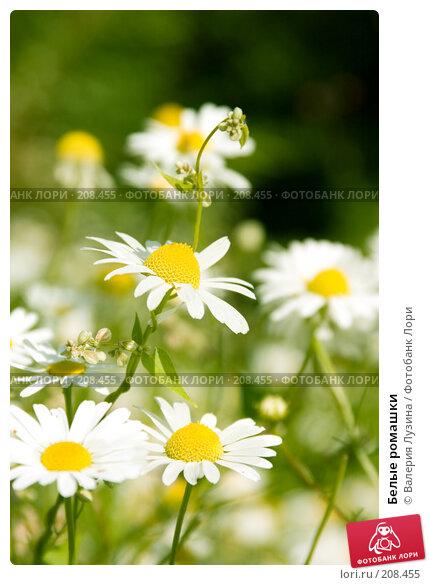 Белые ромашки, фото № 208455, снято 15 августа 2007 г. (c) Валерия Потапова / Фотобанк Лори