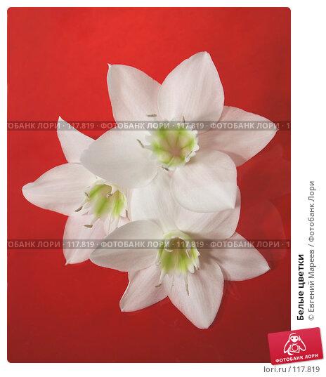 Белые цветки, фото № 117819, снято 15 ноября 2007 г. (c) Евгений Мареев / Фотобанк Лори