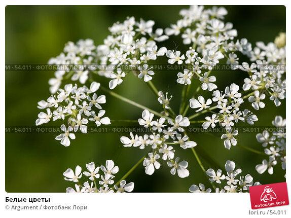 Белые цветы, фото № 54011, снято 9 июня 2005 г. (c) Argument / Фотобанк Лори