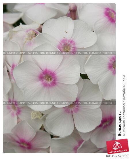Белые цветы, эксклюзивное фото № 57115, снято 13 августа 2005 г. (c) Михаил Карташов / Фотобанк Лори