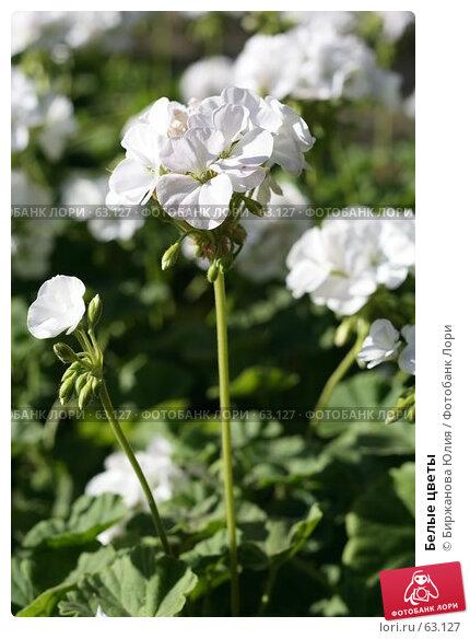 Купить «Белые цветы», фото № 63127, снято 21 июня 2007 г. (c) Биржанова Юлия / Фотобанк Лори