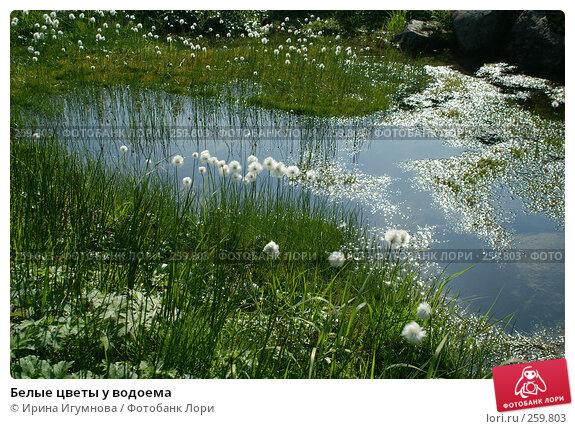 Белые цветы у водоема, фото № 259803, снято 18 октября 2006 г. (c) Ирина Игумнова / Фотобанк Лори