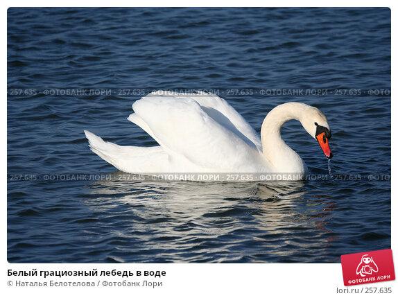 Белый грациозный лебедь в воде, фото № 257635, снято 29 марта 2008 г. (c) Наталья Белотелова / Фотобанк Лори