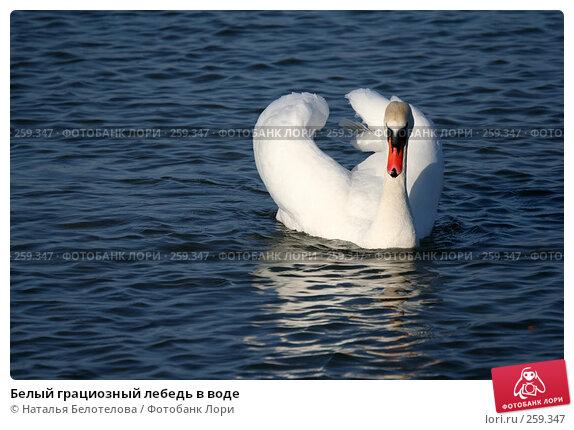 Белый грациозный лебедь в воде, фото № 259347, снято 29 марта 2008 г. (c) Наталья Белотелова / Фотобанк Лори