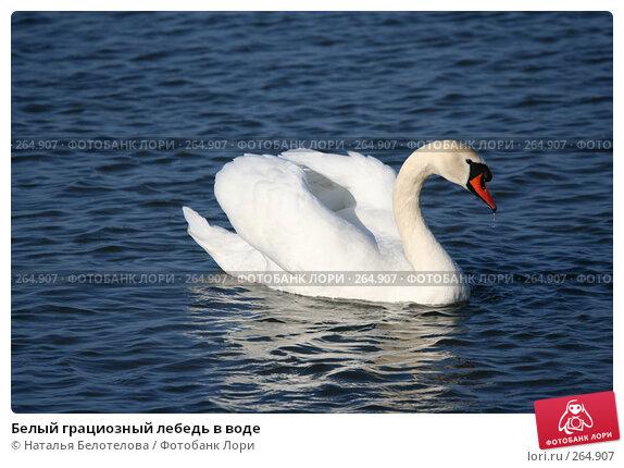 Белый грациозный лебедь в воде, фото № 264907, снято 29 марта 2008 г. (c) Наталья Белотелова / Фотобанк Лори