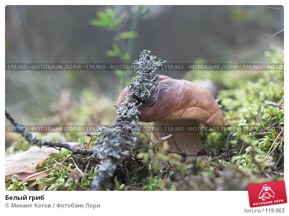 Белый гриб, фото № 119963, снято 23 сентября 2007 г. (c) Михаил Котов / Фотобанк Лори