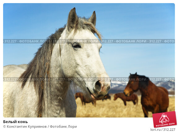 Купить «Белый конь», фото № 312227, снято 24 марта 2018 г. (c) Константин Куприянов / Фотобанк Лори
