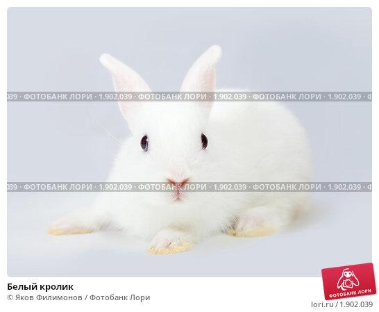 Белый кролик. Стоковое фото, фотограф Яков Филимонов / Фотобанк Лори