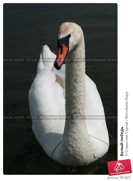 Белый лебедь, фото № 91527, снято 31 мая 2007 г. (c) Старостин Сергей / Фотобанк Лори