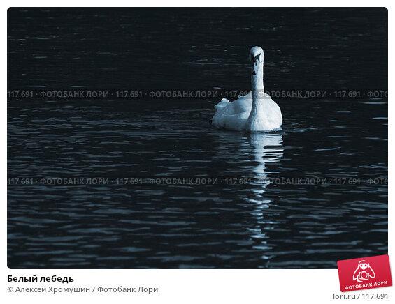 Белый лебедь, фото № 117691, снято 28 сентября 2006 г. (c) Алексей Хромушин / Фотобанк Лори