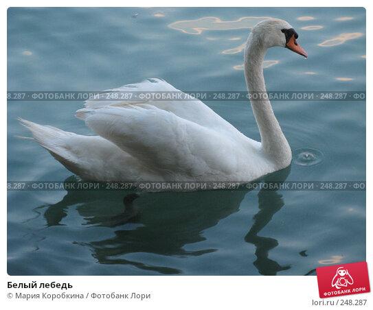 Белый лебедь, фото № 248287, снято 26 мая 2017 г. (c) Мария Коробкина / Фотобанк Лори