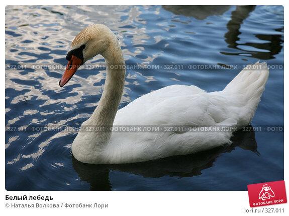 Белый лебедь, эксклюзивное фото № 327011, снято 18 июня 2008 г. (c) Наталья Волкова / Фотобанк Лори