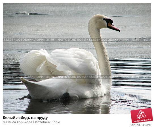 Белый лебедь на пруду, фото № 33891, снято 15 апреля 2007 г. (c) Ольга Хорькова / Фотобанк Лори