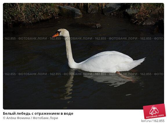 Белый лебедь с отражением в воде, фото № 162855, снято 28 марта 2007 г. (c) Алёна Фомина / Фотобанк Лори