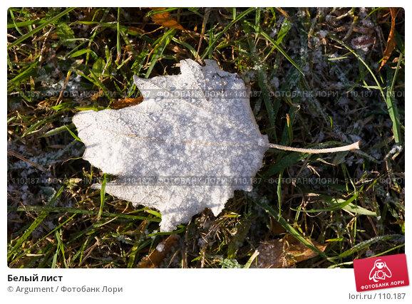 Купить «Белый лист», фото № 110187, снято 5 ноября 2007 г. (c) Argument / Фотобанк Лори