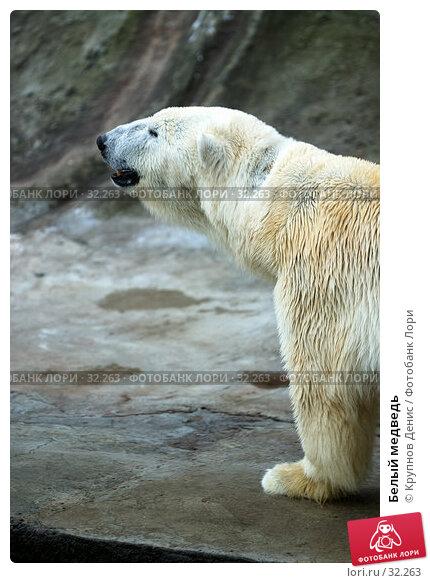 Белый медведь, фото № 32263, снято 4 марта 2007 г. (c) Крупнов Денис / Фотобанк Лори