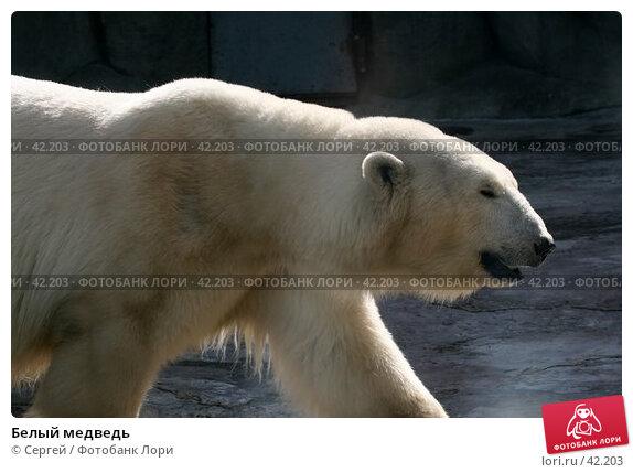 Белый медведь, фото № 42203, снято 10 апреля 2007 г. (c) Сергей / Фотобанк Лори