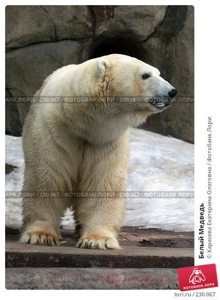 Белый Медведь, фото № 230067, снято 10 февраля 2008 г. (c) Карасева Екатерина Олеговна / Фотобанк Лори