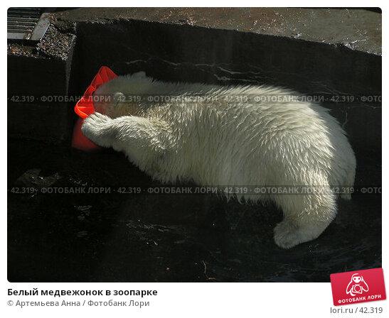 Белый медвежонок в зоопарке, фото № 42319, снято 27 марта 2017 г. (c) Артемьева Анна / Фотобанк Лори