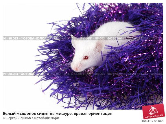 Белый мышонок сидит на мишуре, правая ориентация, фото № 88063, снято 23 сентября 2007 г. (c) Сергей Лешков / Фотобанк Лори