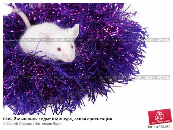 Белый мышонок сидит в мишуре, левая ориентация, фото № 88059, снято 23 сентября 2007 г. (c) Сергей Лешков / Фотобанк Лори