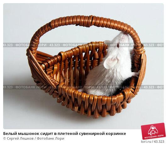 Белый мышонок сидит в плетеной сувенирной корзинке, фото № 43323, снято 18 марта 2007 г. (c) Сергей Лешков / Фотобанк Лори