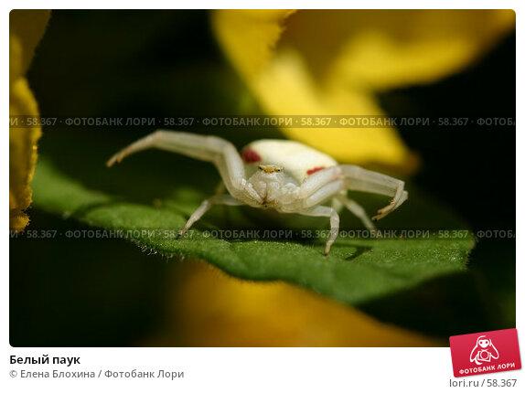 Белый паук, фото № 58367, снято 9 июня 2007 г. (c) Елена Блохина / Фотобанк Лори