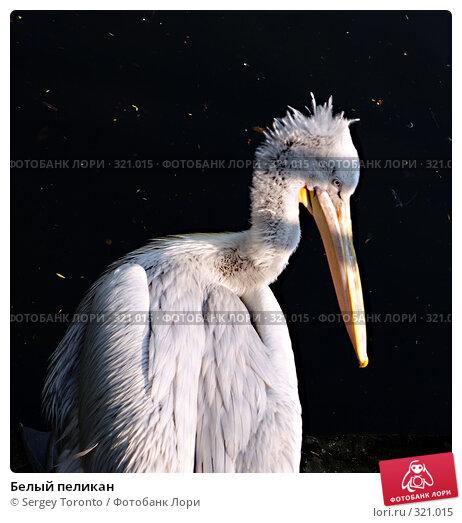 Купить «Белый пеликан», фото № 321015, снято 12 апреля 2008 г. (c) Sergey Toronto / Фотобанк Лори