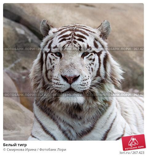 Белый тигр, фото № 267423, снято 8 апреля 2008 г. (c) Смирнова Ирина / Фотобанк Лори