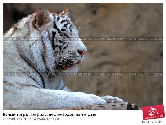 Белый тигр в профиль: послеобеденный отдых, фото № 34443, снято 4 марта 2007 г. (c) Крупнов Денис / Фотобанк Лори