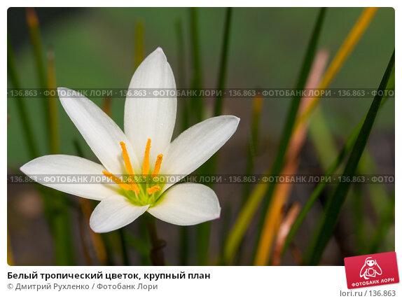 Белый тропический цветок, крупный план, фото № 136863, снято 10 сентября 2007 г. (c) Дмитрий Рухленко / Фотобанк Лори