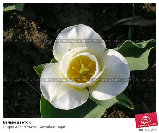 Белый цветок, эксклюзивное фото № 223, снято 7 мая 2004 г. (c) Ирина Терентьева / Фотобанк Лори