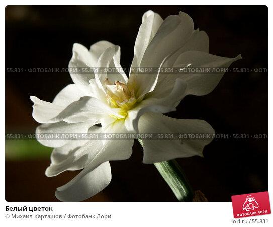 Белый цветок, эксклюзивное фото № 55831, снято 27 мая 2007 г. (c) Михаил Карташов / Фотобанк Лори