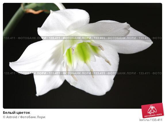 Купить «Белый цветок», фото № 133411, снято 28 апреля 2007 г. (c) Astroid / Фотобанк Лори