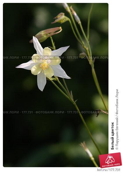 Белый цветок, фото № 177731, снято 22 сентября 2017 г. (c) Парушин Евгений / Фотобанк Лори