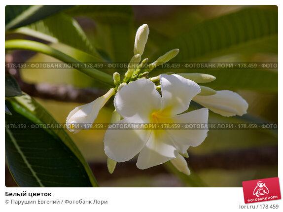Белый цветок, фото № 178459, снято 27 мая 2017 г. (c) Парушин Евгений / Фотобанк Лори