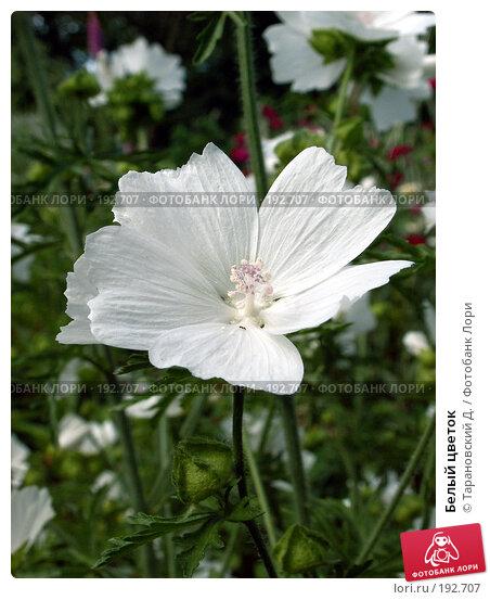 Белый цветок, фото № 192707, снято 15 июля 2006 г. (c) Тарановский Д. / Фотобанк Лори