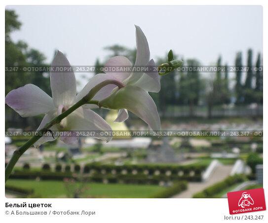 Купить «Белый цветок», фото № 243247, снято 5 марта 2008 г. (c) A Большаков / Фотобанк Лори