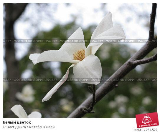Купить «Белый цветок», фото № 254527, снято 18 марта 2008 г. (c) Олег Дрыго / Фотобанк Лори