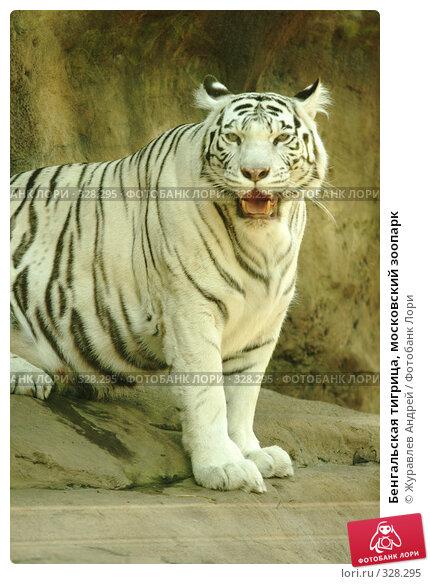 Бенгальская тигрица, московский зоопарк, эксклюзивное фото № 328295, снято 18 июня 2008 г. (c) Журавлев Андрей / Фотобанк Лори