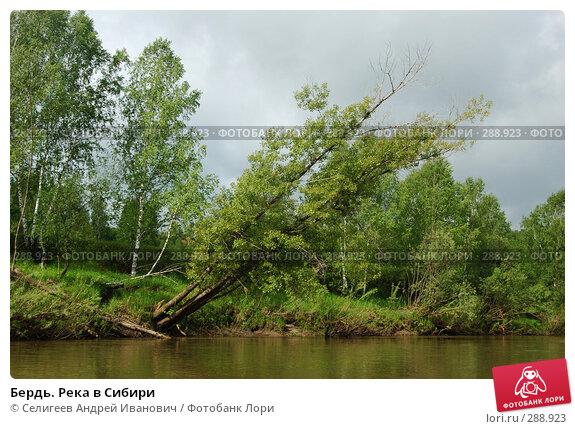 Бердь. Река в Сибири, фото № 288923, снято 11 июня 2007 г. (c) Селигеев Андрей Иванович / Фотобанк Лори
