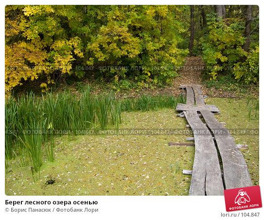 Берег лесного озера осенью, фото № 104847, снято 28 июля 2017 г. (c) Борис Панасюк / Фотобанк Лори